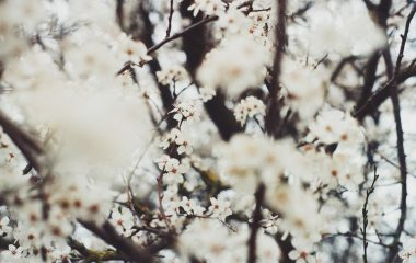 blossom-macro-nature-photography