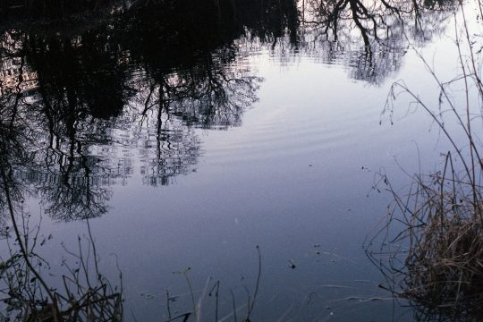 reflection-trees-in-water-shot-on-film-2